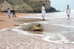 Explore Pakistan - Wildlife