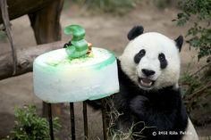 Happy Birthday celebration for Yun Zi. San Diego Zoo