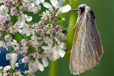 The moth in flowers Photo by Yasir Mehmood -- National Geographic Your Shot