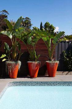 ✔ 25 suitable plants grow beside swimming pool 23 > Fieltro. Plants Around Pool, Pool Plants, Tropical Plants, Potted Plants, Tropical Gardens, Backyard Pool Landscaping, Tropical Landscaping, Landscaping Ideas, Patio