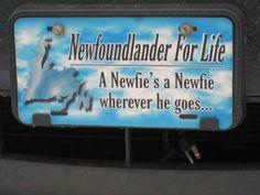 Newfoundlander for Life