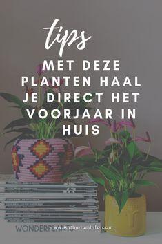 Met deze planten haal je direct het voorjaar in huis | Anthurium Info | anthurium, bloemen, bloem, plant, planten, kamerplant, kamerplanten Small Plants, Indoor Plants, Dutch, Lifestyle, Spring, Interior, Instagram, Inside Plants, Dutch Language
