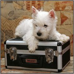 Enya is packing her suitcase and leaving for her new home :-)))