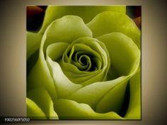 Obraz květu žluté růže (F002560F5050) Rose, Flowers, Plants, Pink, Plant, Roses, Royal Icing Flowers, Flower, Florals