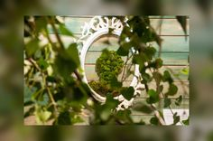 Moss picture created by Raicelai https://m.facebook.com/Raicelai-Terrariums-and-green-deco-1420289481601293/