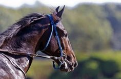 Cozmic One logs another work toward debut   Daily Racing Form