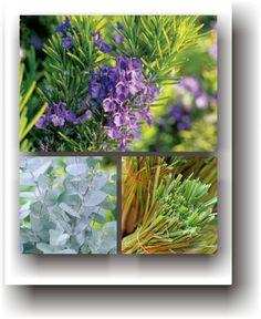 Medicine, Plant