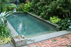26 Splash Pools Ideas Small Pools Plunge Pool Pool Designs