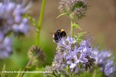 We need the bees and bumblebees to survive