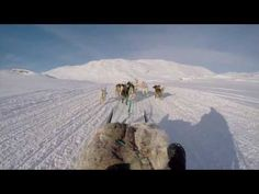 In case you missed it, here you go 🙌 Dog sledding in Greenland https://youtube.com/watch?v=RalXGfu_mBs