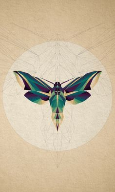 geometric moth - Google Search