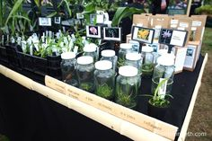 The Writhlington Orchid Project's exhibit at the RHS Hampton Court Palace Flower…