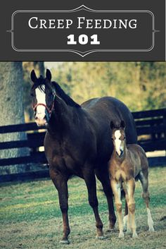 Knowing when and how to creep feed your foal is key to their health and development.