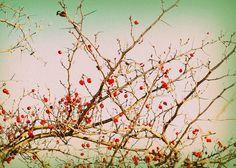 Winter Berries 2 by JadeNewkirk on Etsy, $10.00