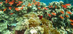 Finding Nemo in Sipadan, Sabah-Malaysia