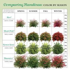 If you live in a dry and arid climate then your desert landscaping is going to take a little more planning than some other parts of the country. desert landscaping will have to work with a plan that includes only plants and trees that House Landscape, Landscape Designs, Front Garden Landscape, Landscape Plans, Landscaping Plants, Front Yard Landscaping, Landscaping Ideas, Southern Landscaping, Vegetable Gardening