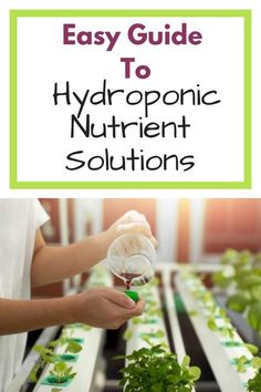 Hydroponics Simple guide to hydroponic nutrient solutions. Learn all you need to know to keep your hydroponic plants healthy. This guide covers all you need to know about hydroponic nutrients, whether you are a beginner or intermediate hydroponic grower. Hydroponic Farming, Hydroponic Plants, Hydroponic Growing, Aquaponics System, Diy Hydroponics, Backyard Aquaponics, Homemade Hydroponic System, Hydroponic Grow Systems, Gardening For Beginners