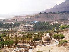 Palm groves at Kibbutz Ein Gedi, Dead Sea, Israel Dead Sea Israel, Sea Level, Travel Memories, Places Ive Been, Grand Canyon, Palm, Ocean, Faith, Live
