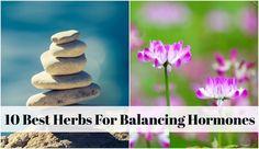 10-Best-Herbs-For-Balancing-Hormones