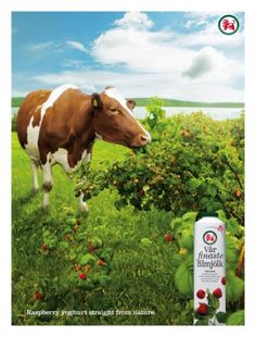 1000 Images About En Pinturas On Pinterest Cow Cow
