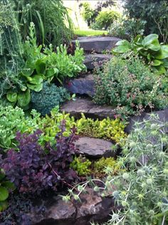 Beautiful perennial plant mix