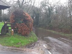 Floods in Winchfield, Hartley Wintney, Hook and Crookham Village cast doubt on new town plan Flood Church, January 2016, Canoe, It Cast, Country Roads, How To Plan, Pictures, Photos