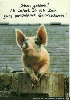 ein Bild für's Herz 'Glücksschwein.jpg'