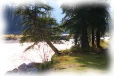 Kootenay National Park, Alberta copyright by Donald Bruce Edward Wilson 2014