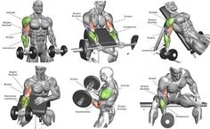 Bicep Workout Program More