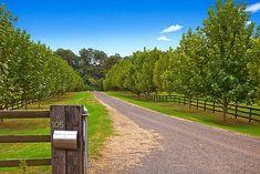Tree lined driveway