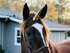 Unicorn Horn Equine Browband with Gold Pink White Blue Silver or Purple Horn - Horse, Pony or Miniature Horse Brow Band with Unicorn Horn Bright Purple, Pink Sky, Pink White, Medieval Horse, Horse Costumes, Draft Horses, Blue And Silver, Black Gold, Horse Love