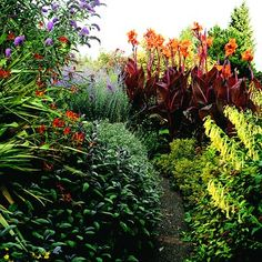 Small Tropical Gardens on Pinterest Tropical Garden