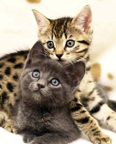 Two beauties!!