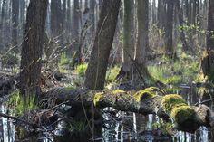 Biebrzański Park Narodowy / Biebrza National Park