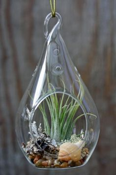 Teardrop Hanging Terrarium Clear Glass 5-1/2-inch by PartySpin