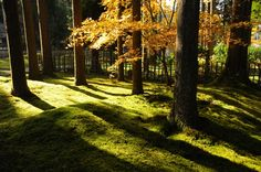小松・加賀撮影会①~叡智の杜~ - 金沢の片隅から forest of wisdom