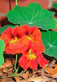 We sharing free ideas every day Plantar, Gras, Edible Flowers, Food Design, Fresco, Flora, Bouquet, Landscape, Nature