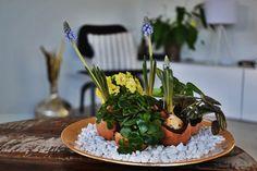 Petite-amie DIY: Schattige plantjes in eierschalen