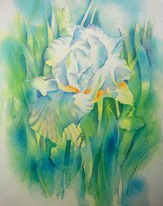 Weiße Iris | Thomas Habermann | Flickr