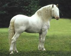Image result for white draft horse