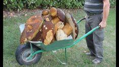CAMPI DI BOVA # calabria-italy - raccolta funghi con la CARRIOLA !! Growing Mushrooms, Wild Mushrooms, Stuffed Mushrooms, Mushroom Art, Mushroom Fungi, Home Landscaping, Farm Gardens, Wheelbarrow, Diy Garden Decor