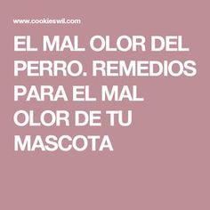 EL MAL OLOR DEL PERRO. REMEDIOS PARA EL MAL OLOR DE TU MASCOTA