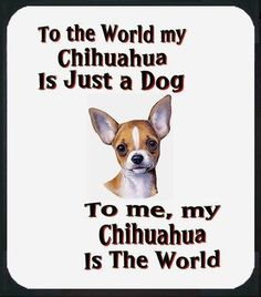 Chihuahua quote #dogs #animal #chihuahua