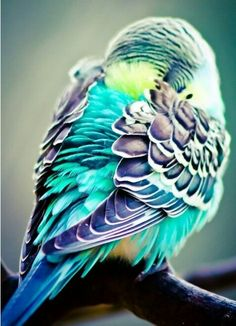 belas cores!