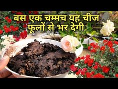Best fertilizer for plants, Homemade compost fertilizer, Free and natural compost fertilizer Mr. Fertilizer For Plants, Liquid Fertilizer, Garden Compost, Gardening, Seed Germination, Plant Care, Skin Care Tips, Seeds, Homemade