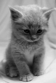 This little kitty looks lonely. I want to cuddle her and give her something yummy to eat.