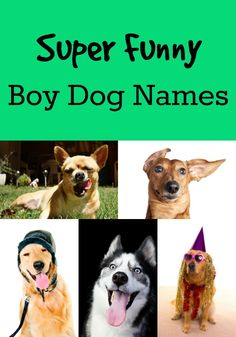 french dog names cute male and female naming ideas
