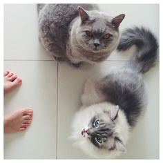 hungry cats