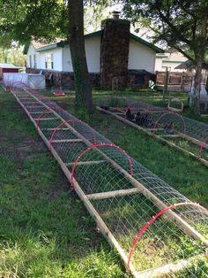 Chicken Tunnel More #raisingchickens #DIYchickencoopplans #chickencooptips #ChickenCoopPlans