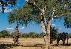 The wild side: Africa on Safari – in pictures